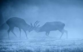 animals, mammals, deer
