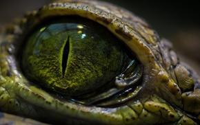 macro, reptiles, eyes, animals