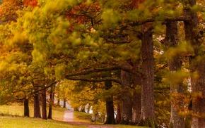 landscape, path, trees