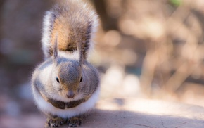 animals, squirrel