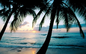 sea, beach, water, palm trees, photography, tropical