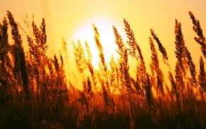 photography, field, plants, sunset, depth of field