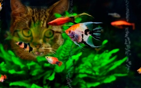 water, fish, cat, tropical fish