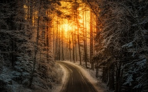 Finland, trees, road, snow, nature, forest
