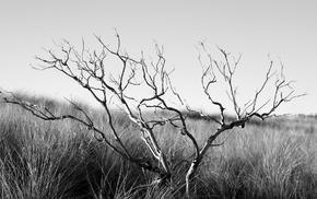 plants, depth of field, photography, nature, monochrome