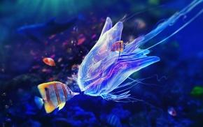 colorful, jellyfish, animals, fish, underwater, sea