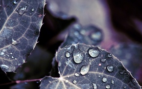 nature, leaves, photography, macro, water drops