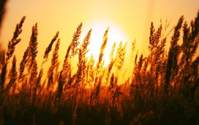 depth of field, plants, photography, nature, sunset