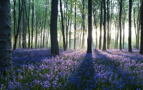 landscape, trees, forest, flowers, nature, photography