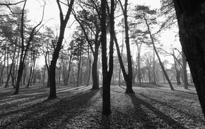 park, Serbia, nature, monochrome