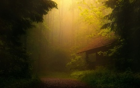 forest, house, road, trees, nature, mist