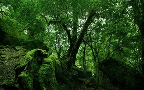trees, nature, tropical forest, forest, landscape