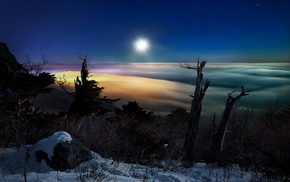 snow, trees, moonlight, South Korea, landscape, shrubs
