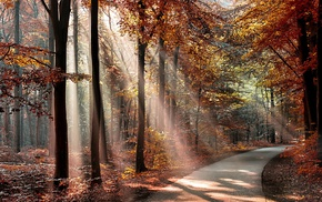 leaves, fall, forest, nature, branch, road