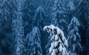 nature, trees, forest, branch, landscape, winter