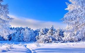trees, path, nature, landscape, snow, winter
