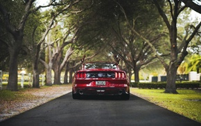 nature, rear view, Ford, mustang gt500, Ford Mustang Shelby, muscle cars