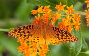 macro, animals, lepidoptera