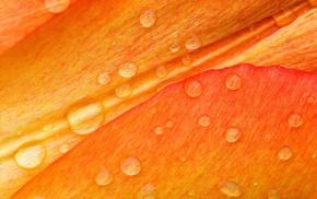 flowers, macro, water drops