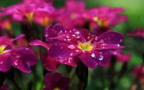 macro, flowers, water drops