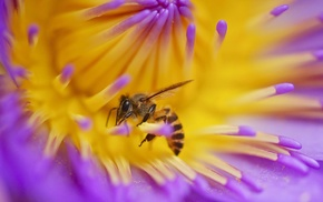 macro, animals, flowers, insect, bees, hymenoptera