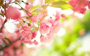 macro, blossoms, flowers