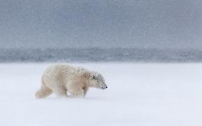 polar bears, mammals, animals, snow