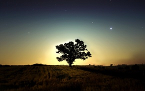 trees, landscape, field, night, photography, nature