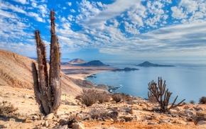 nature, sea, Atacama Desert, coast, landscape, cactus