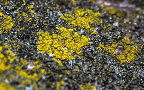 stone, macro