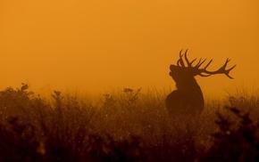 elk, mammals