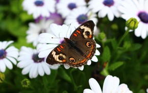 flowers, lepidoptera, macro, insect