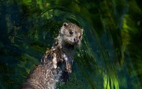 mammals, otters, animals