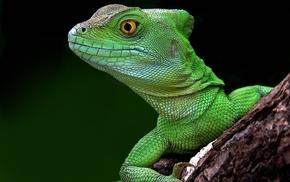 lizards, macro
