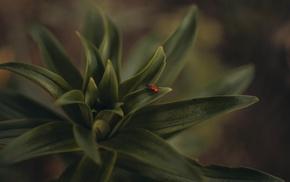 plants, macro, insect, beetles