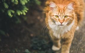 pet, cat, animals