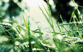 green, leaves, grass, plants, nature, photography