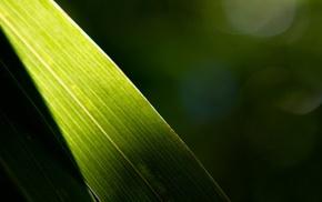 nature, plants, leaves, macro, photography