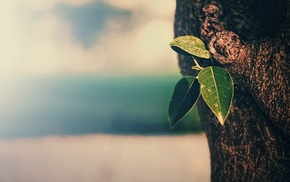 bokeh, trees, tea plant, vintage, nature, depth of field