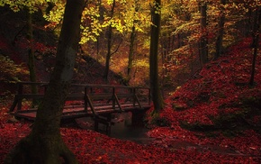 creeks, bridge, nature, leaves, trees, walkway