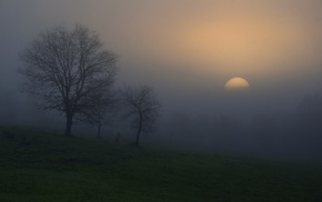 nature, mist, atmosphere, trees, grass, morning