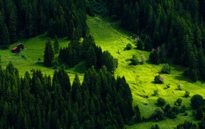 trees, landscape, nature, green