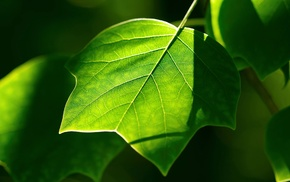photography, nature, green, leaves, macro