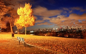 fall, lights, night, urban, bench, leaves