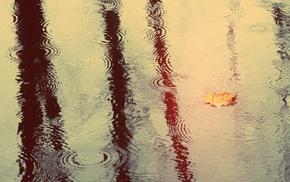 water, leaves, photography, rain