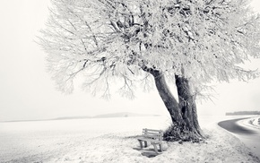 snow, winter, nature, photography, trees, landscape