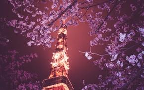 Hanami, Japan, Tokyo Tower