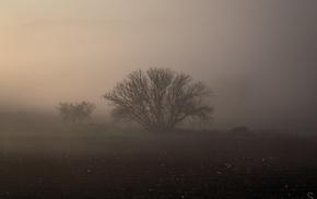 mist, ground, panorama, photography, nature, trees