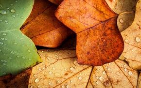 nature, closeup, macro, leaves, wet, fall