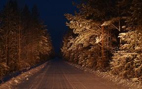 trees, path